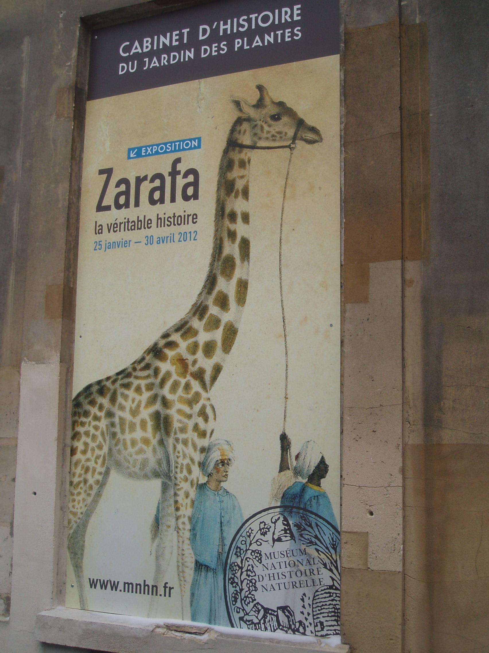 Exposition Zarafa Au Cabinet D Histoire Du Jardin Des Plantes Une