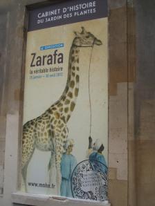Exposition Zarafa au cabinet d'histoire du Jardin des Plantes : une expo un peu courte sur pattes…