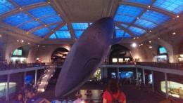 Ooooh! LA baleine... :')