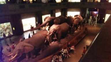 Metropolitan Museum3