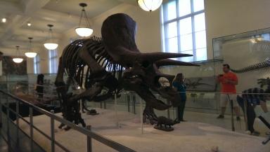 Metropolitan Museum2