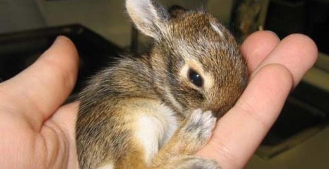 top-5-des-bebes-animaux-les-plus-mignons-image-417358-article-ratio193_900